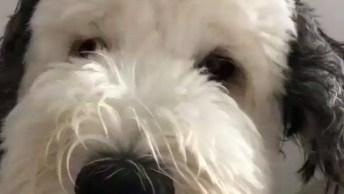 Cachorro Que Mais Parece Um Personagem De Desenho, Sabe Qual É?