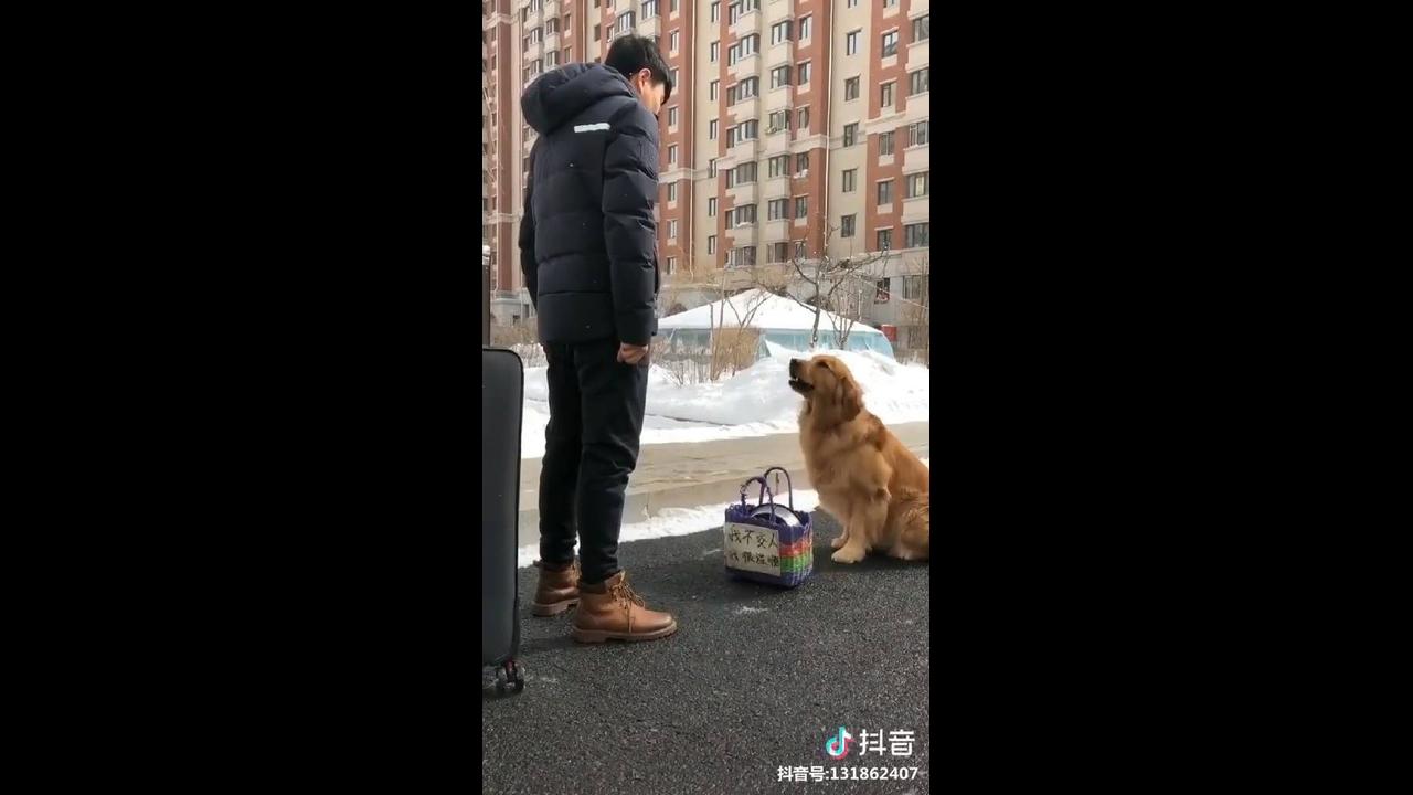 Cachorro que não quer deixar o dono viajar