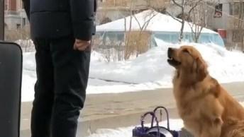 Cachorro Que Não Quer Deixar O Dono Viajar, Veja Que Fofura!