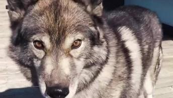 Cachorro Que Obedece A Diversos Comandos, Como Ele É Obediente!