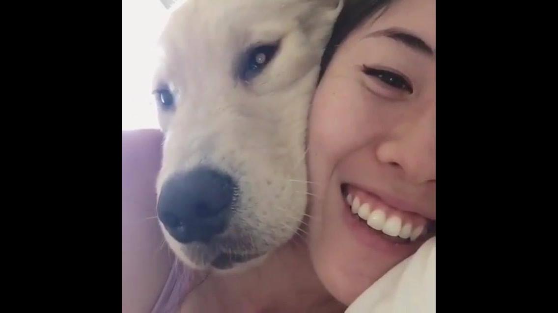 Cachorro quer sair no video com sua dona