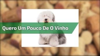 Cachorro Querendo Tomar O Vinho Do Humano, Que Espetinho!