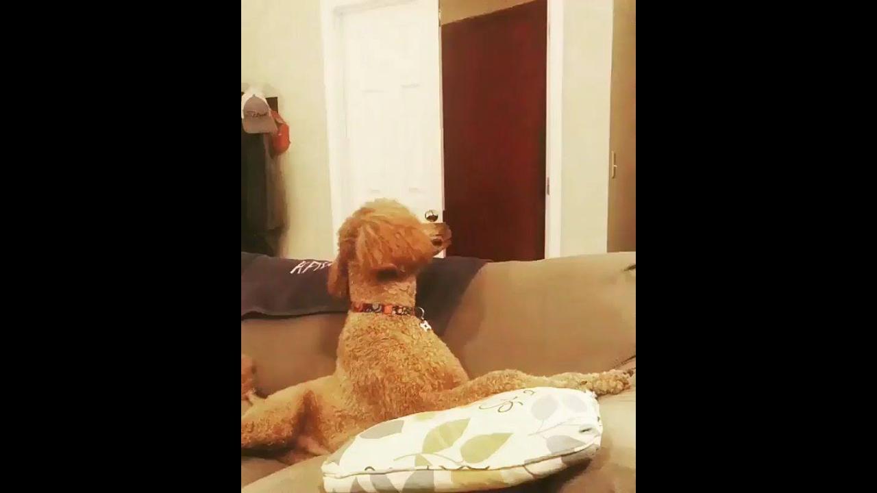 Cachorro ragindo a magica do desaparecimento