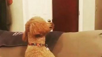 Cachorro Ragindo A Mágica Do Desaparecimento, Olha Só Que Engraçadinho!