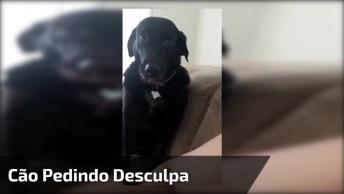 Cachorro Reagindo A Sua Dona Chamando Atenção Dele, Olha O Arrependimento!