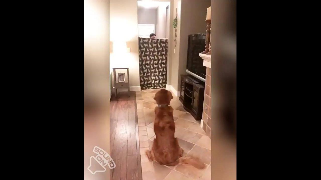 Cachorro recebe surpresa de seu dono que acabou de volta de serviço
