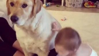 Cachorro Recebendo Abraso De Bebê, Que Amor Do Bebê Pelo Seu Amigo!