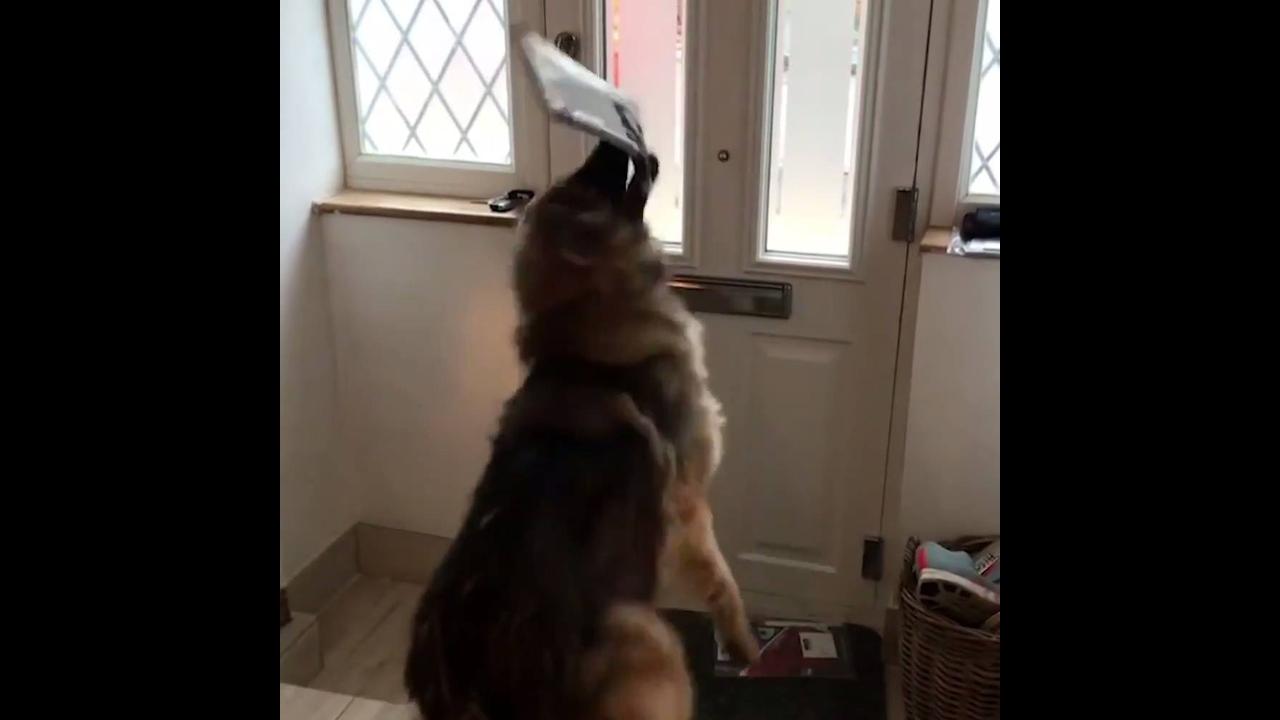 Cachorro recebendo as cartas do correio