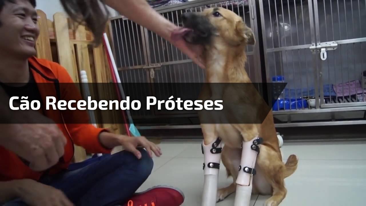 Cão recebendo próteses