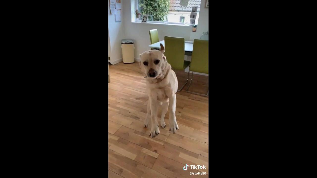 Cachorro recebendo seu dono