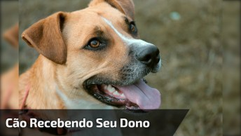 Cachorro Recebendo Seu Dono Que Ficou Muito Tempo Fora De Casa!