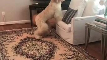 Cachorro Recebendo Seu Irmão Em Casa, Que Recepção Adorável!