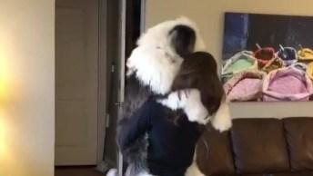 Cachorro Recebendo Sua Dona Com Tanto Amor, Que Vai Se Apaixonar!