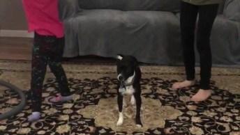 Cachorro Representando Aquelas Pessoas Que Não Conseguem Se Enturmar Na Festa!