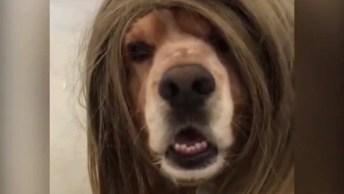 Cachorro Representando Todas As Mulheres Saindo De Um Salão De Beleza!