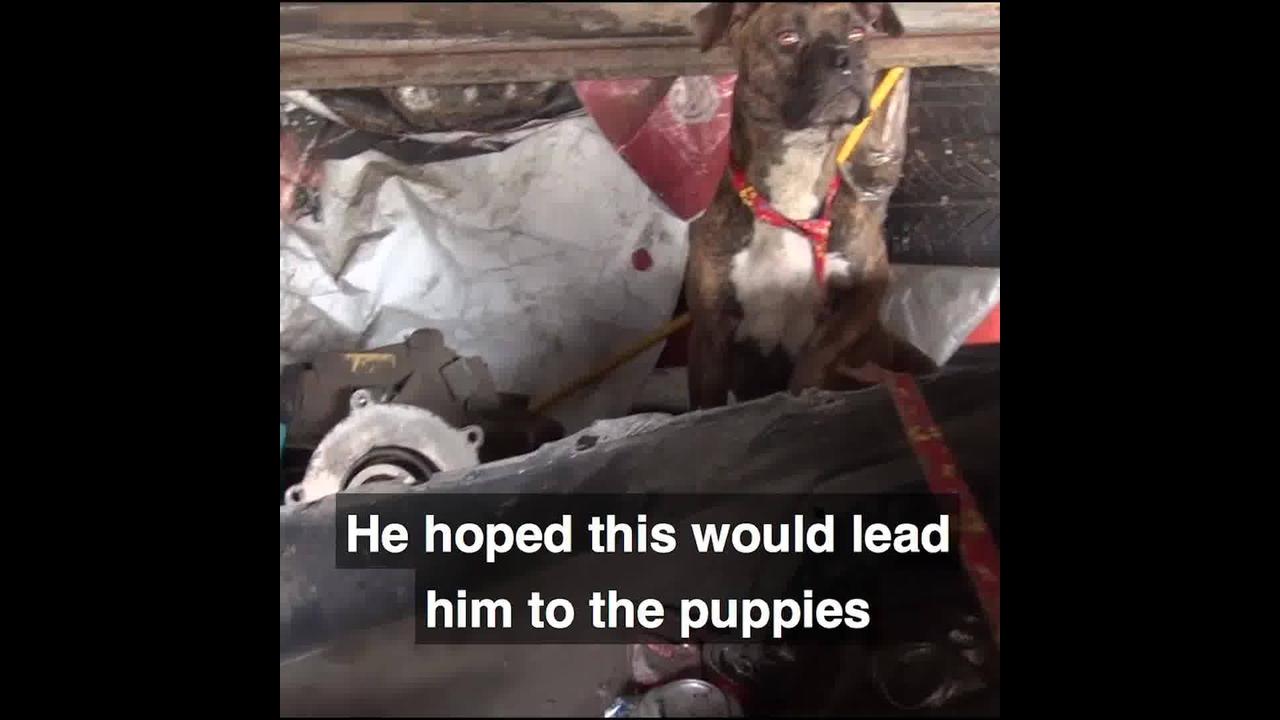 Cachorro resgatado de cativeiro