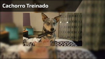 Cachorro Responde A Todos Comendo De Sua Dona, Olha Só Que Animal Inteligente!