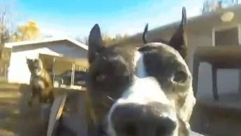 Cachorro Roubou Uma Câmera E Saiu Filmando, O Melhor Vídeo Do Dia!