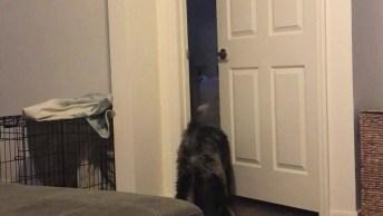 Cachorro Sabe Abrir Maçaneta Da Porta Para Poder Sair, Veja Que Esperto!