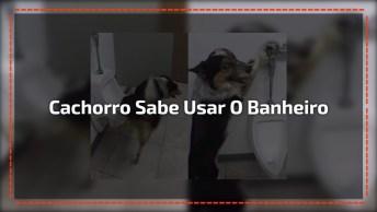 Cachorro Sabe Fazer Xixi No Vaso Sanitário, Olha Só Que Inteligente!