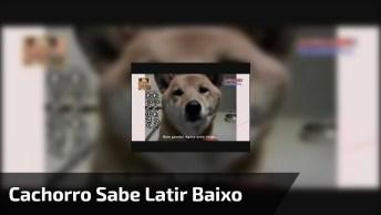 Cachorro Sabe Latir Mais Baixo, Que Fofura Meu Deus, Lindinho Demais!
