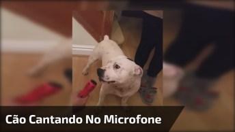 Cachorro Sabe Muito Bem O Que Fazer Quando Se Coloca O Microfone Para Ele!