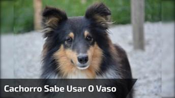 Cachorro Sabe Usar O Vaso Sanitário, Se Não Fosse Filmado Não Dava Pra Acreditar