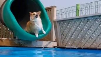 Cachorro Saindo De Toboágua, Que Delicia De Pulo, Confira!