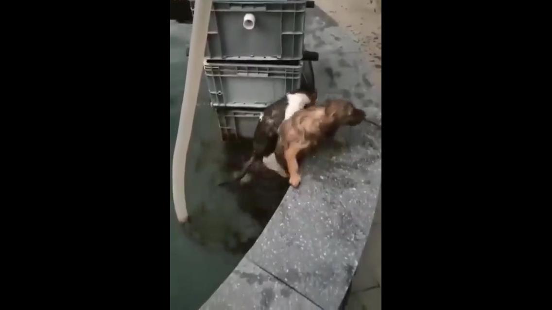 Cachorro salva gatinho na água