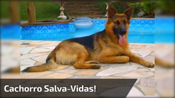 Cachorro Salva-Vidas, Veja Como Ele É Esperto E Rápido!