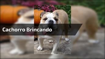 Cachorro Se Divertido Com Caminhão De Brinquedo - É Muita Fofura!