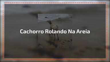 Cachorro Se Esbaldando Na Areia Da Praia, Olha Só A Cor Que Ele Ficou!