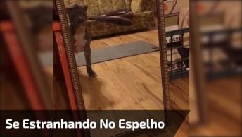 Cachorro Se Estranhando No Espelho, Olha Só Que Engraçado!