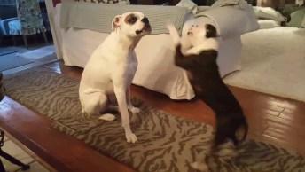 Cachorro Se Fazendo De Difícil Para Cachorro Menor, Confira!