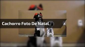 Cachorro Se Preparando Para A Foto De Natal, Veja Que Coisa Mais Fofa!