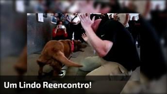 Cachorro Se Reencontrando Com Sargento Aposentado, Que Cena Mais Linda!