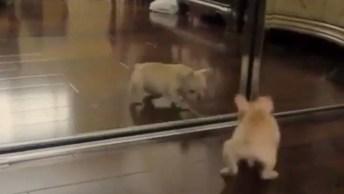 Cachorro Se Vê Em Espelho E Faz Algo Muito Engraçado, Confira!