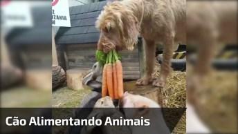 Cachorro Segurando Cenoura Para Os Animais Da Fazenda, Veja Que Fofo!