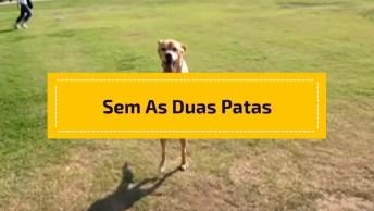 Cachorro Sem As Duas Patas Dianteiras Caminhando Feliz, Confira!