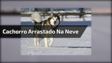 Cachorro Sendo Arrastado Pelo Humano, Que Engraçado, Confira!