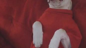 Cachorro Sendo 'Baleado' De Mentirinha, É Claro, Confira!