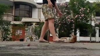 Cachorro Shiba Inu Fazendo Coisas Incríveis, Como Ele É Inteligente!