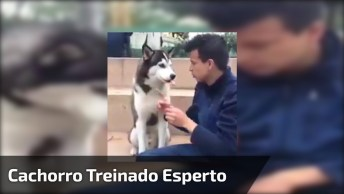 Cachorro Só Come Petisco Quando O Tutor Fala Três Em Inglês!