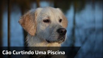 Cachorro Só Curtindo Uma Piscina, Olha Só A Pose Dele De Playboyzinho!