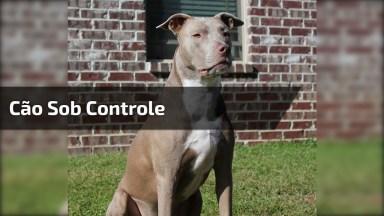 Cachorro Sob Controle, Veja Como O Adestramento É Importante!
