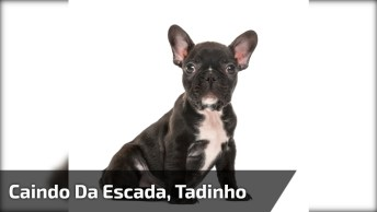 Cachorro Sobe As Escadas E Depois Desce Rolando, Coitadinho?