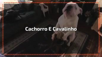Cachorro Sobe Em Cavalinho De Madeira E Brinca Como Uma Criança!