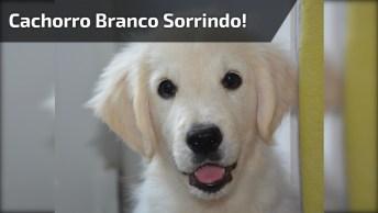 Cachorro Sorri Enquanto Sua Tutora Canta Música Para Ele, Muito Engraçado!