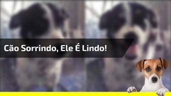 Cachorro Sorri Quando Sua Dona Canta Musiquinha Para Ele, Olha Só Que Fofo!