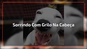 Cachorro Sorrindo Com Grilo Na Cabeça, Tem Como Resistir A Esse Sorriso?